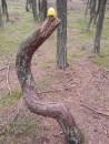 хендгам, танцующий лес, handgum, зачем хендгам