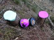 грибы, хендгам, антистрес, лес
