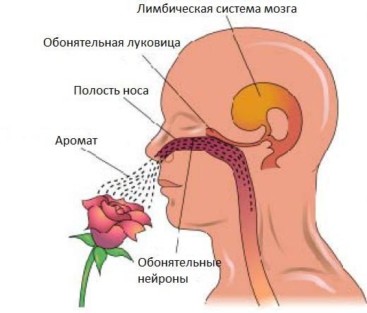 почему присутствует запах изо рта