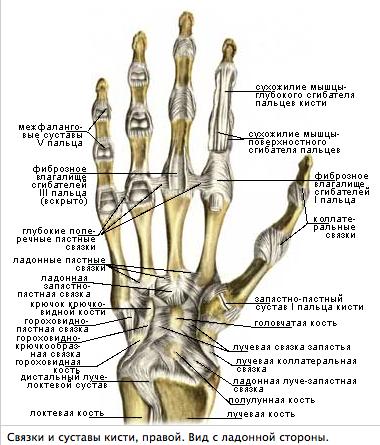 Сустав руки гонортроз гель в суставах